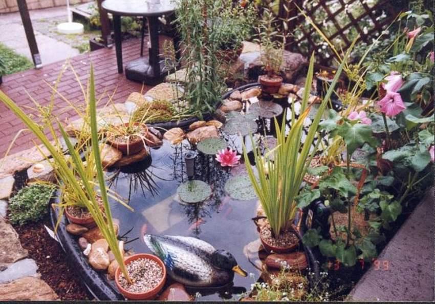 Unser kleiner Gartenteich