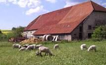 Bauernhof Großheim Bauernhof  - Bild 1