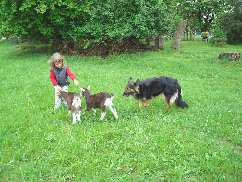 Marie mit Ziegenkindern