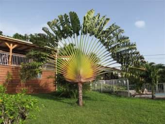 Chalets Sous-le-Vent Ferienhaus in Mittelamerika und Karibik - Bild 8