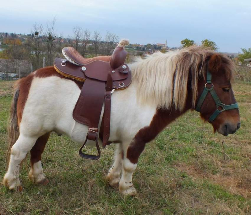 Streichelzoo mit Ponys, Ziegen, Schafen, Wollschweinen ...