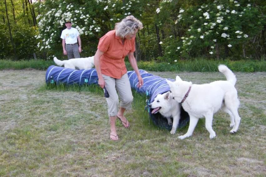 Eigener Hundeübungsplatz zur freien Verfügung