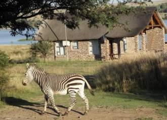 Ferienhaus THULA GAME LODGE -  andere Region Südafrika   KROONSTAD (FREESTATE) N1 -