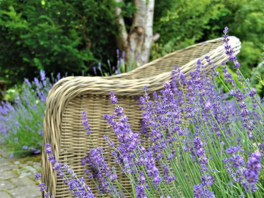 Lavendelglück